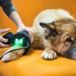 DSC01430 Leon Lichttherapie in Praxis 01